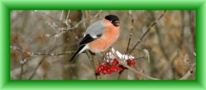 vinterfuglen